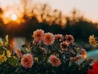 foto de foco seletivo de flores com pétalas rosa