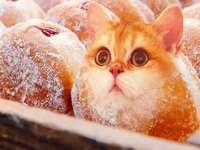 beignet de chaton