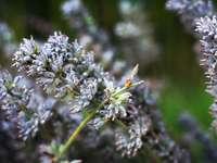 μοβ άνθη σε φακό μετατόπισης κλίσης