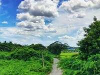 zöld fák és növények fehér felhők és a kék ég alatt