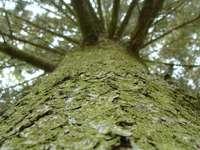 Gyönyörű fa