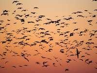 ptáci během zlaté hodiny