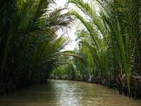 ποτάμι που περιβάλλεται από φοίνικες