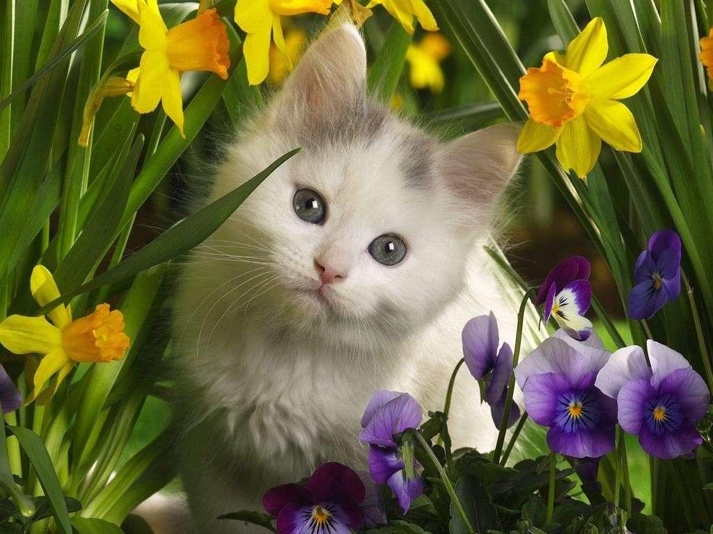 kotek w kwiatach