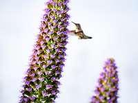 sárga kolibri lila virág
