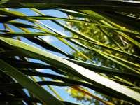 płytkie zdjęcie ostrości zielonych liści