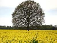 zelený listový strom mezi polem žlutého květu