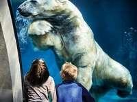 две момчета, гледащи кафява бяла бяла мечка