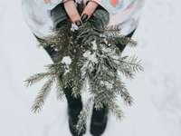 osoba, která drží rostlinu zelené borovice se sněhem