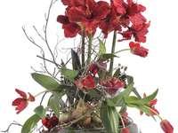 compositie met amaryllis en tulpen