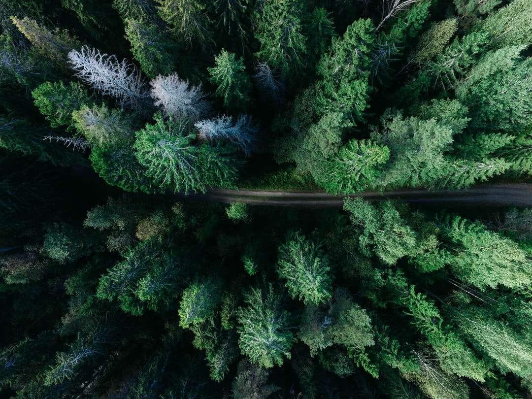 nízký úhel fotografie borovic - Vzdálená lesní cesta. Gävle, Švédsko (12×9)