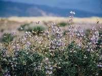 ρηχή εστίαση φωτογραφία του μωβ λουλούδι πεδίο