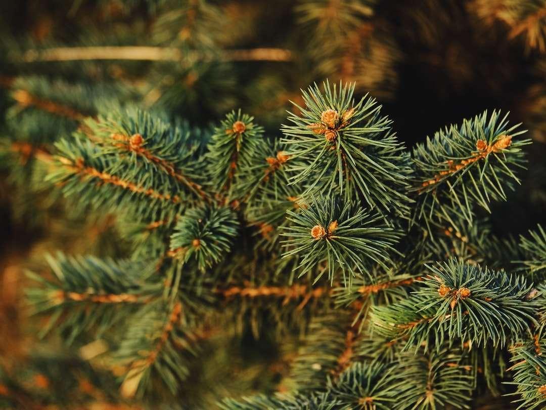 zöld fenyő fa közelről fotózás kirakós játék
