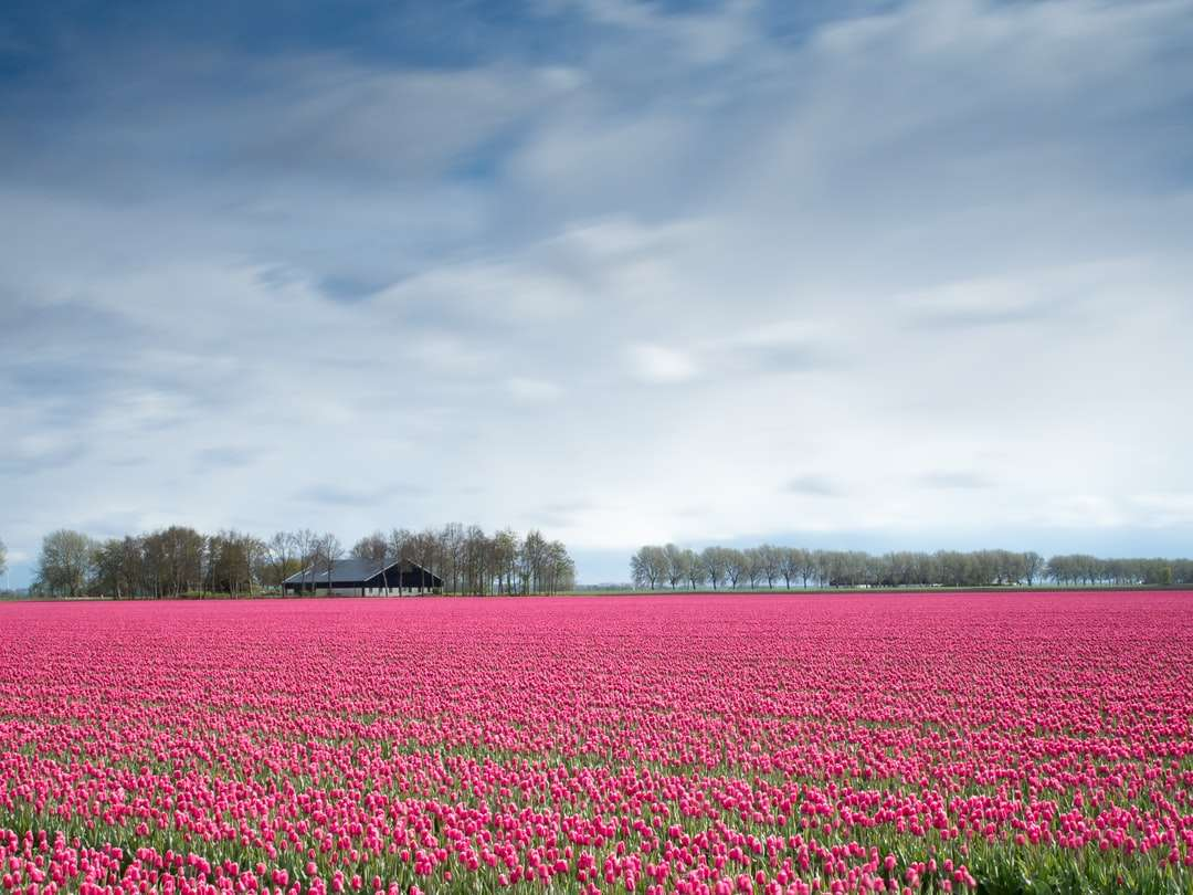 fiori rosa durante il giorno