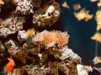 cardume de peixes ao lado de corais marrons