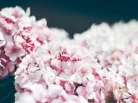 Fotografía de enfoque selectivo de flor de racimo rosa