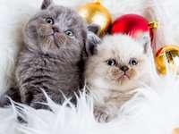 Χριστούγεννα δύο γάτες