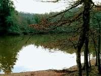 Δάσος Umbra Gargano Ιταλία