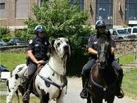 Η τοποθετημένη αστυνομία.
