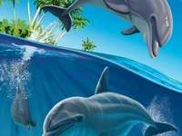 Cheerful dolphins