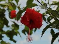 червено цвете в наклонена леща