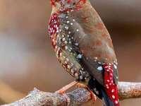 Vacker fågel