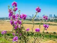 flor rosa em campo marrom durante o dia