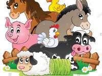 Professor Aboutorabi aprendendo animais de fazenda