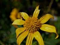 żółty kwiat w soczewce tilt shift