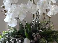 orquídea de vacaciones