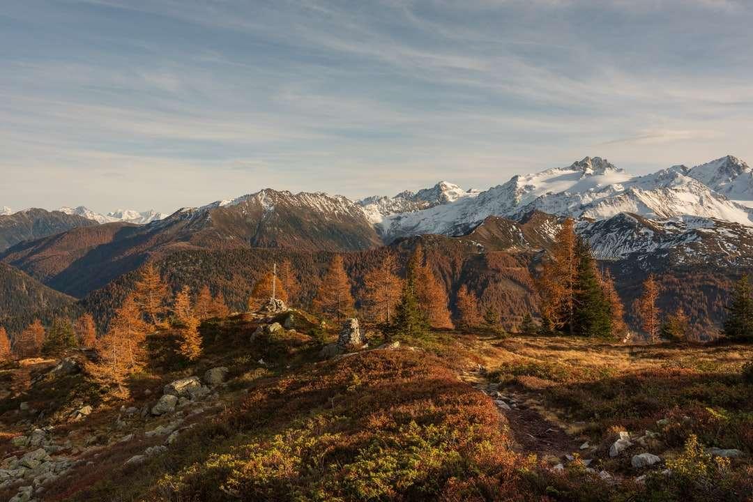árvores marrons e verdes na montanha marrom quebra-cabeça