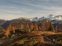 árvores marrons e verdes na montanha marrom