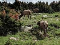 Ciervo marrón en campo de hierba verde durante el día