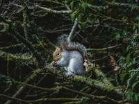 veverița cenușie pe ramura copacului în timpul zilei