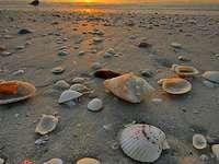 Strand med skal