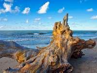 Flotsam de lemn lângă mare