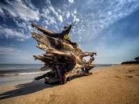 Ξύλινο σκάφος δίπλα στη θάλασσα