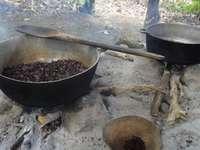 Focolare del caffè - Repubblica Dominicana