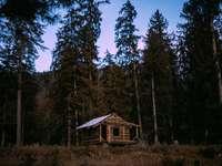 brązowy drewniany dom otoczony drzewami pod błękitnym niebem