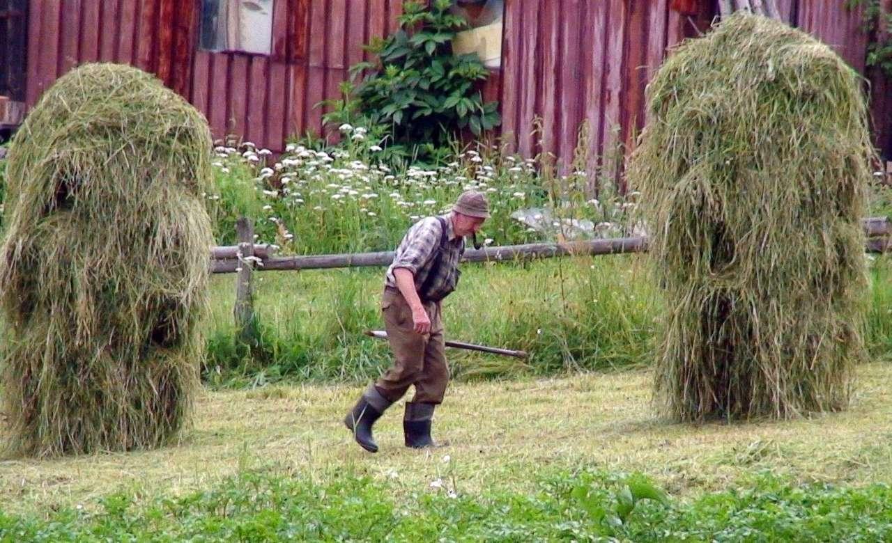 Le travail acharné d'un montagnard - Beskidy village, équipement de foin (16×10)