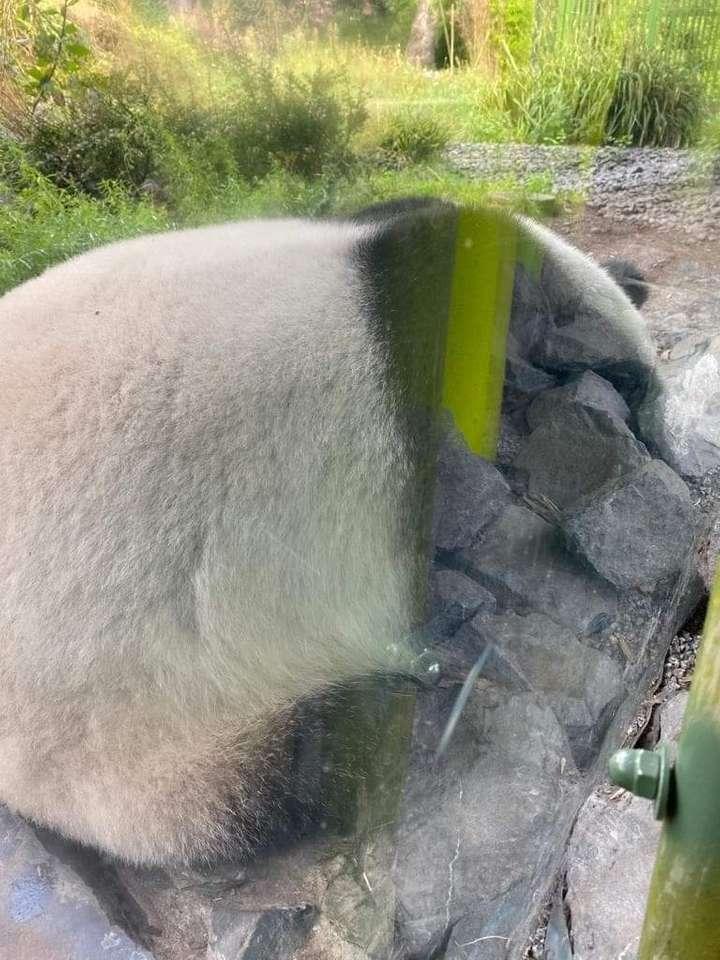 Panda szerető - Panda puzzle mindenkinek (5×7)