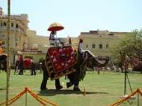 Polo sur les éléphants