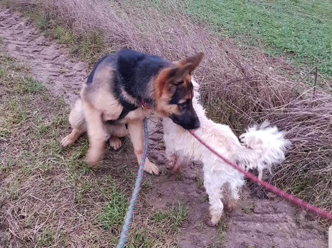 Cachorros en un paseo