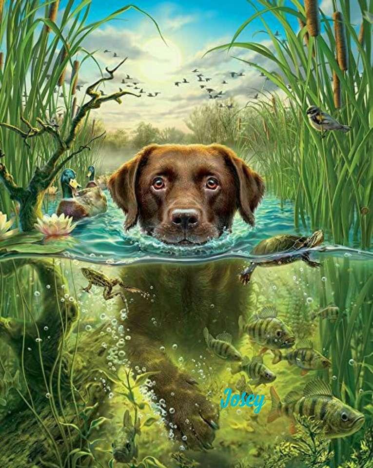 Cachorro nadando - Cão na água entre os peixes (15×20)