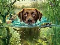 Pływanie psa