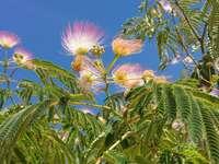Albero in fiore e cielo blu