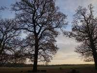 Arbre sans feuilles sur champ d'herbe verte sous les nuages blancs