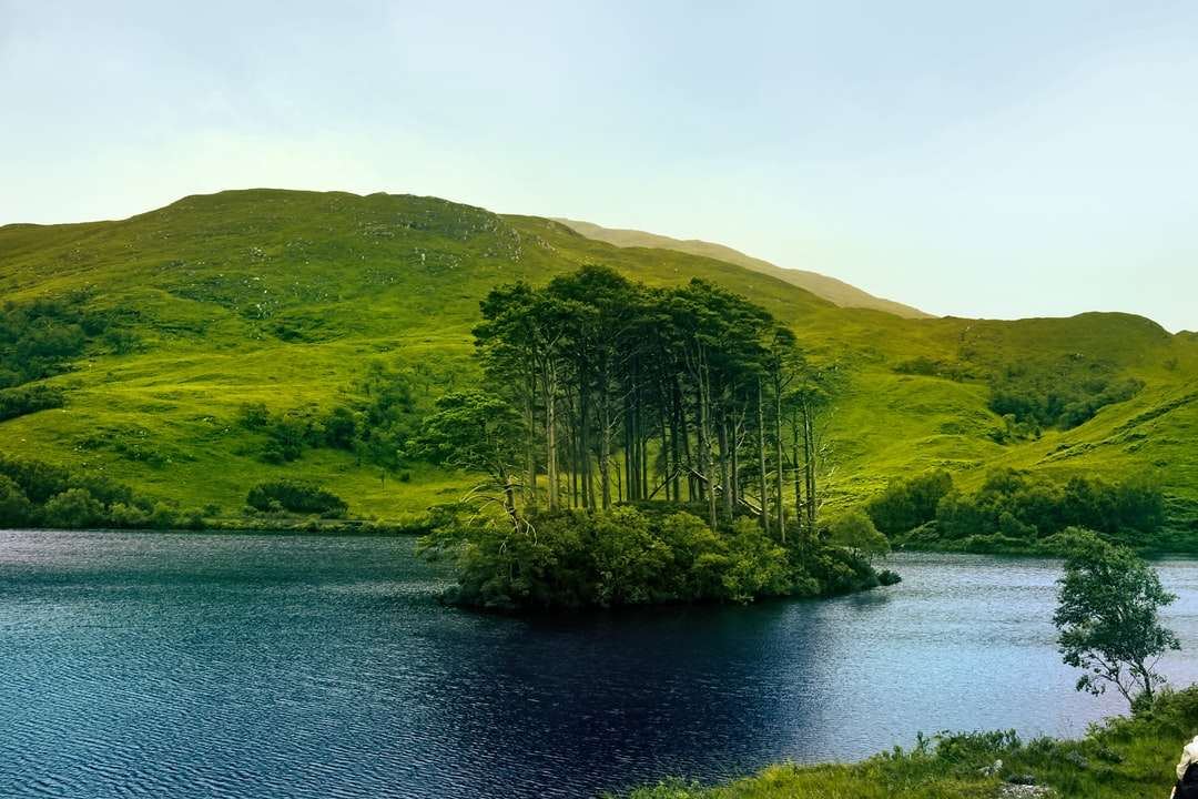 green-leafed tree - Eana na Moine in the marvelous Loch Eilt, where some Harry Potter movies were shot, United Kingdom (3×2)
