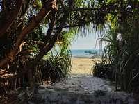 πράσινος φοίνικας σε παραλία με λευκή άμμο κατά τη διάρκεια της ημέρας