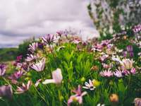 weiße und lila Blumen auf grüner Wiese